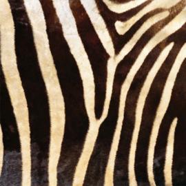 Vinyl Animal skin Zebra