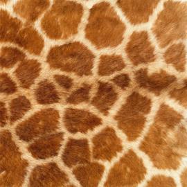Vinyl Animal skin Giraffe