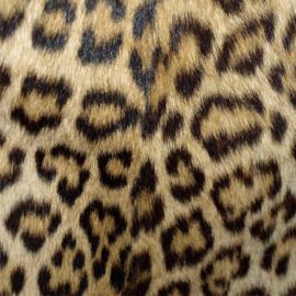Vinyl Animal skin Panther