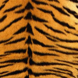Vinyl Animal skin Tiger