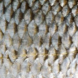 Vinyl Animal skin Fish