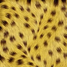 Vinyl Animal skin Cheetah