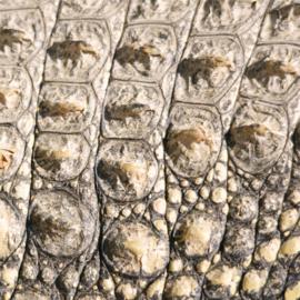 Vinyl Animal skin Crocodile