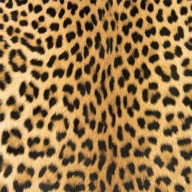 Vinyl Animal skin Leopard