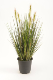 Emerald Gras Plant in plastic pot 45 cm - Groen