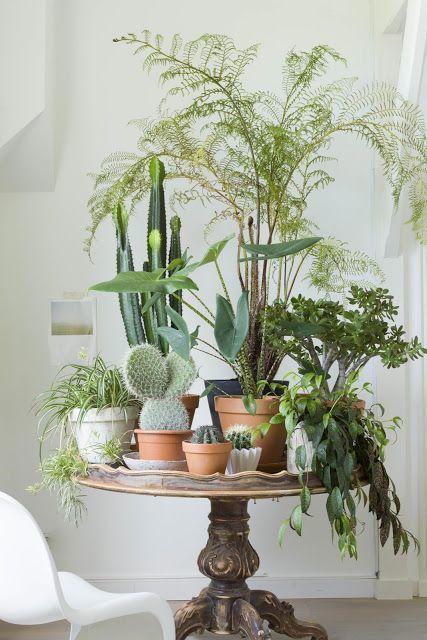 planten op tafel.jpg