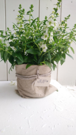 Plantbag small zand