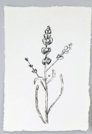 Kaart A5- lavendel