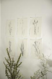 Kaart A5- Grassen set van 6