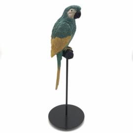 Papegaai polystone op stok H36cm