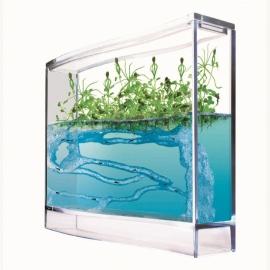 Mieren Aquarium