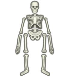 KidzLabs - Skelet