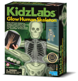 KidzLabs - Skelet