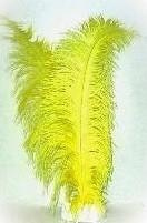Pietenveer geel