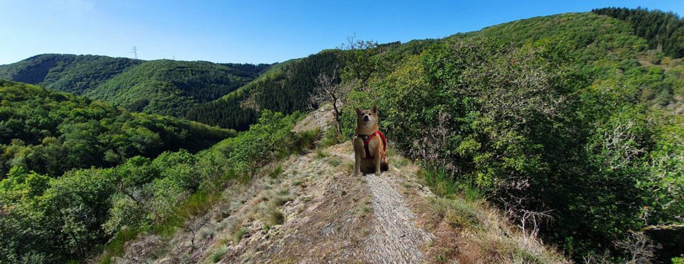Backpack - Lee Trail