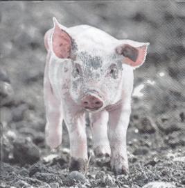 Little Pig, servet Varken