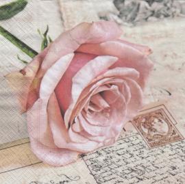 Postcard rose, servet