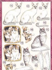 Katten, 3d stansvel