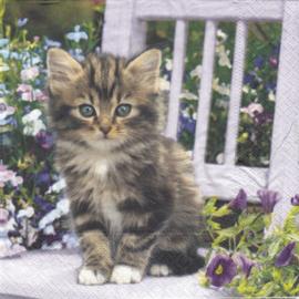 Kitty, servet