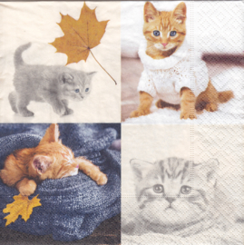 Autumn Cats, servet