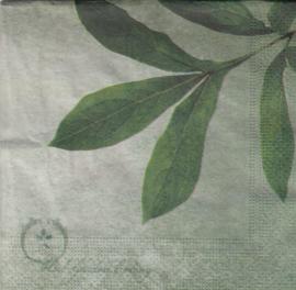 Herb Garden , servet