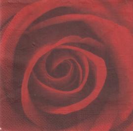 Rode roos, servet