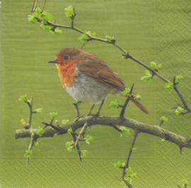 Robin, servet