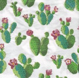 Cactus, servet