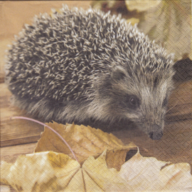 Hedgehog, servet