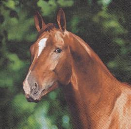 Paard, servet