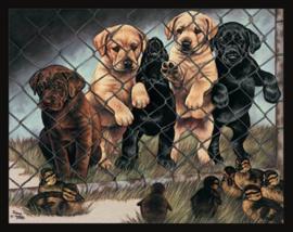 Wandbord metaal Honden ontwerp Graham