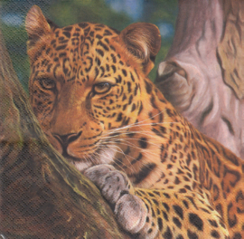 Leopard, servet