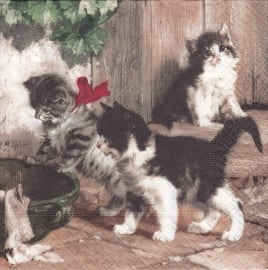 Kitties Meeting, servet