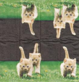 Kitten, zakdoekje