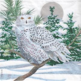 Snow Owl, servet