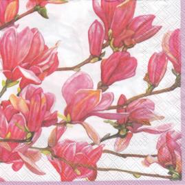 Magnolia, servet
