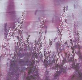 Lavendel, servet