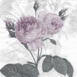 Purple vintage rose, servet