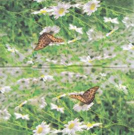 Vlinder, zakdoekje