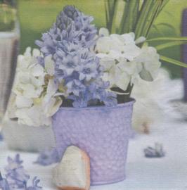 Hyacinth, XL servet
