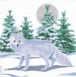 Snow Fox, servet