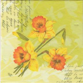 Spring Flowers, XL servet