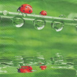 Lady Bugs on Tour, servet