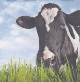 Zwarte koe, servet