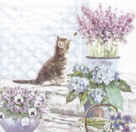Kitten, servet