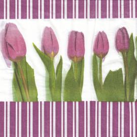 Tulpen, servet