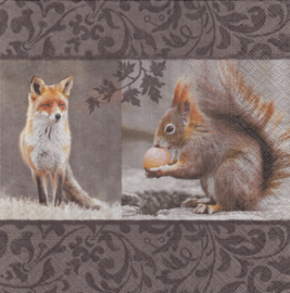 Fox meets Squirrel, servet
