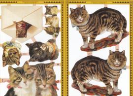 Katten, poëzieplaatje Golden serie