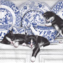 Black Cats, servet