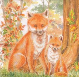 Family Fox, servet